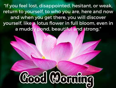 Good Morning 4k Ultra Images Download With English Quotes