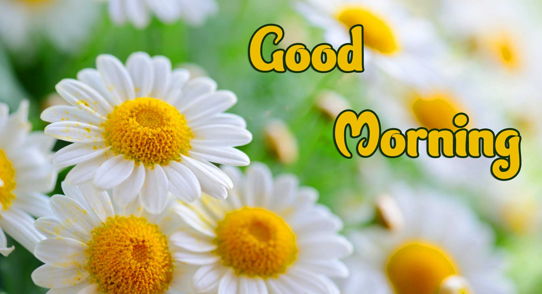 Good Morning 4k Ultra Images Wallpaper Photo for Facebook