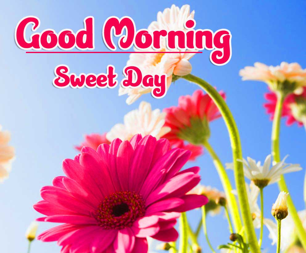 Good Morning 4k Ultra Images Wallpaper Pics Free for Facebook