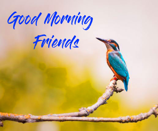 Good Morning Friends Images Wallpaper Pics Download