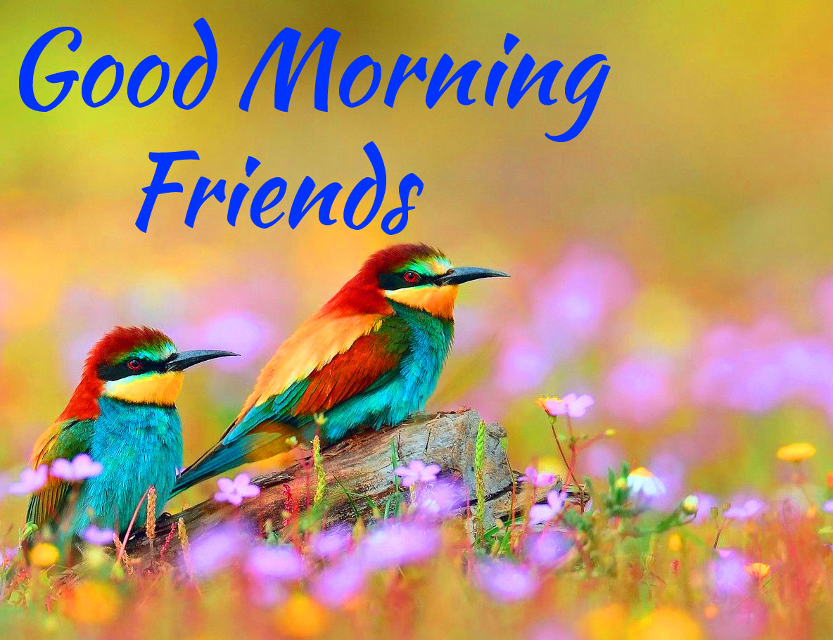 Good Morning Friends Images Wallpaper free Download