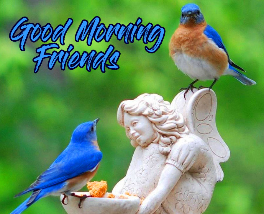 Good Morning Friends Images Photo pics Free Download