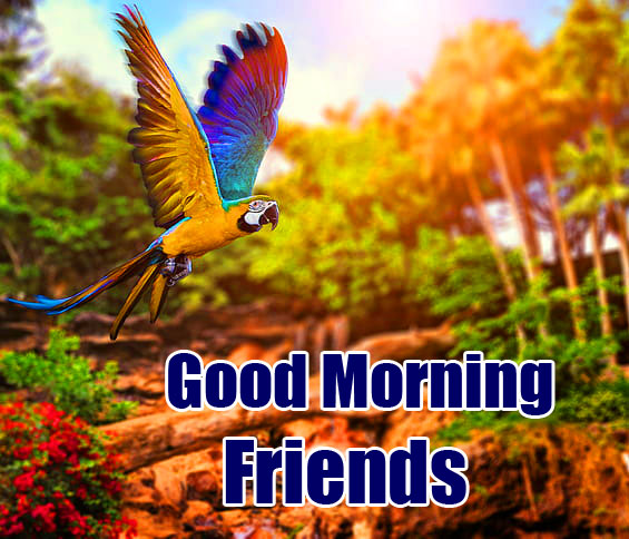 Latest Free Good Morning Friends Images Pics Download