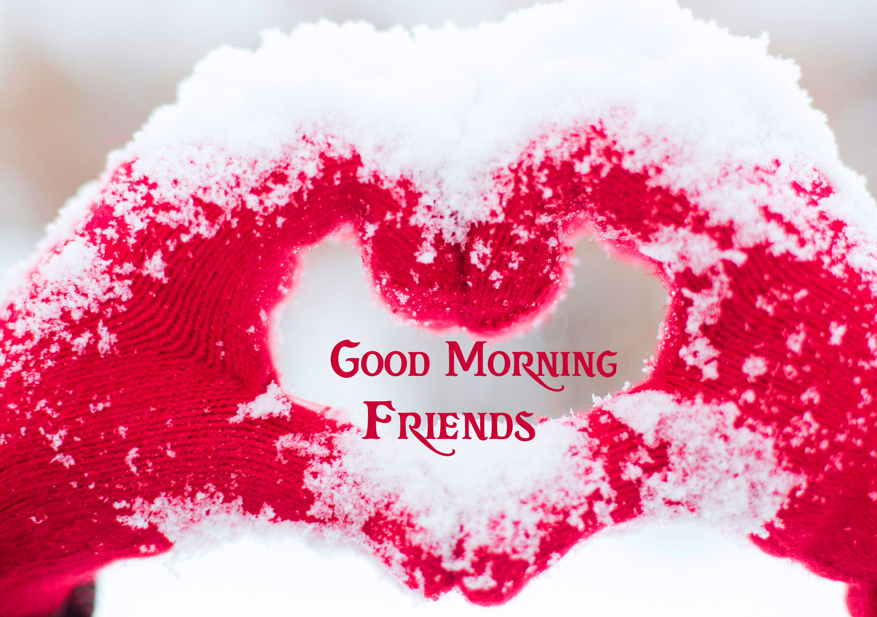 Good Morning Friends Images Pics Wallpaper DOWNLOAD