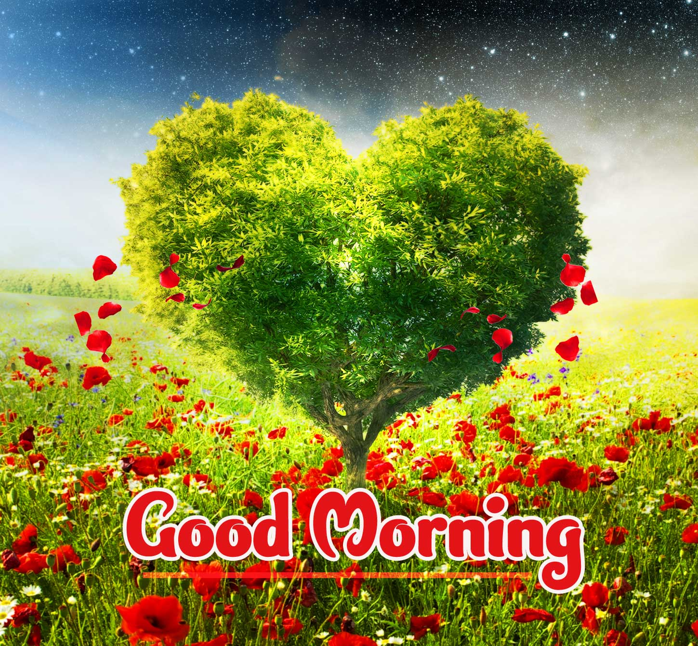 Amazing 1080 p Good Morning 4k ImagesPics Free Download