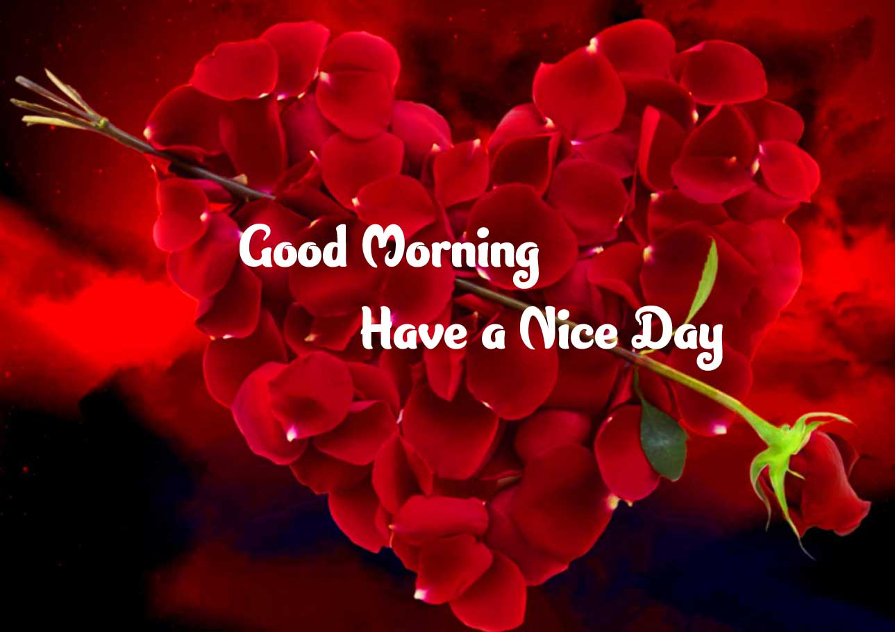 Lover free Amazing 1080 p Good Morning 4k ImagesPics Pictures Download