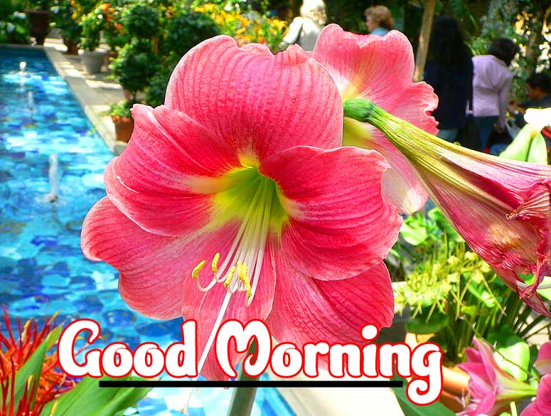 Flower Free Amazing 1080 p Good Morning 4k ImagesPics pictures Download