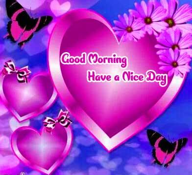 Flower Free Amazing 1080 p Good Morning 4k ImagesPics Download