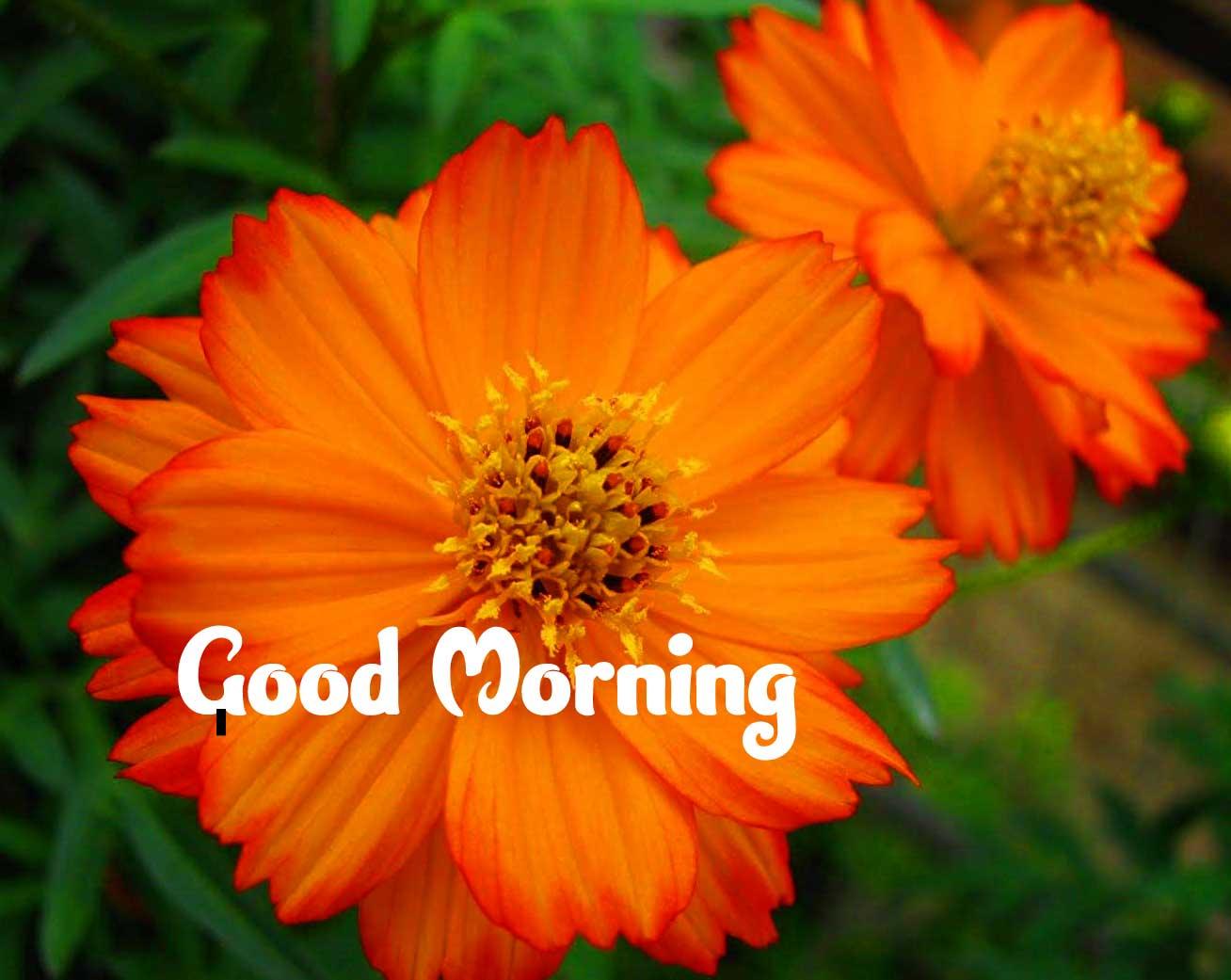 Amazing 1080 p Good Morning 4k ImagesWallpaper Free Download