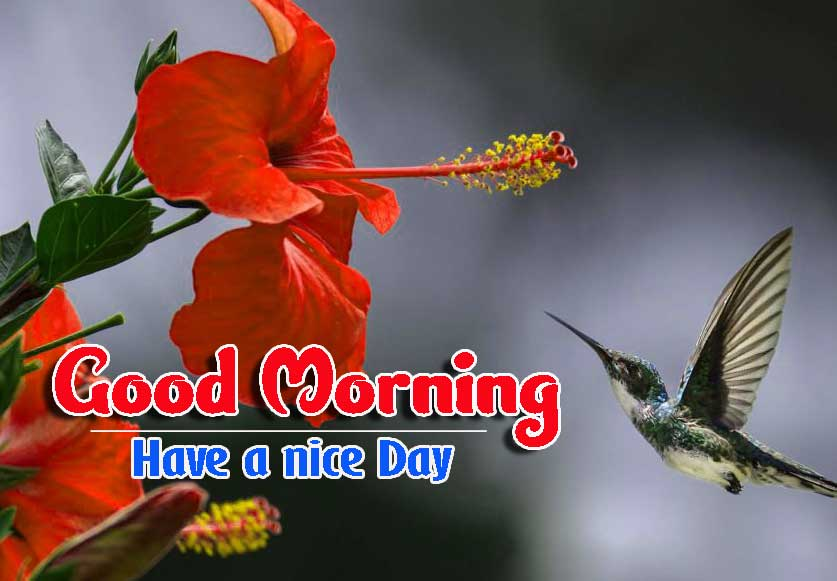 Good Morning Images HD 33