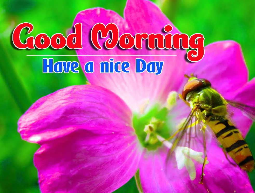 Good Morning Images HD 37