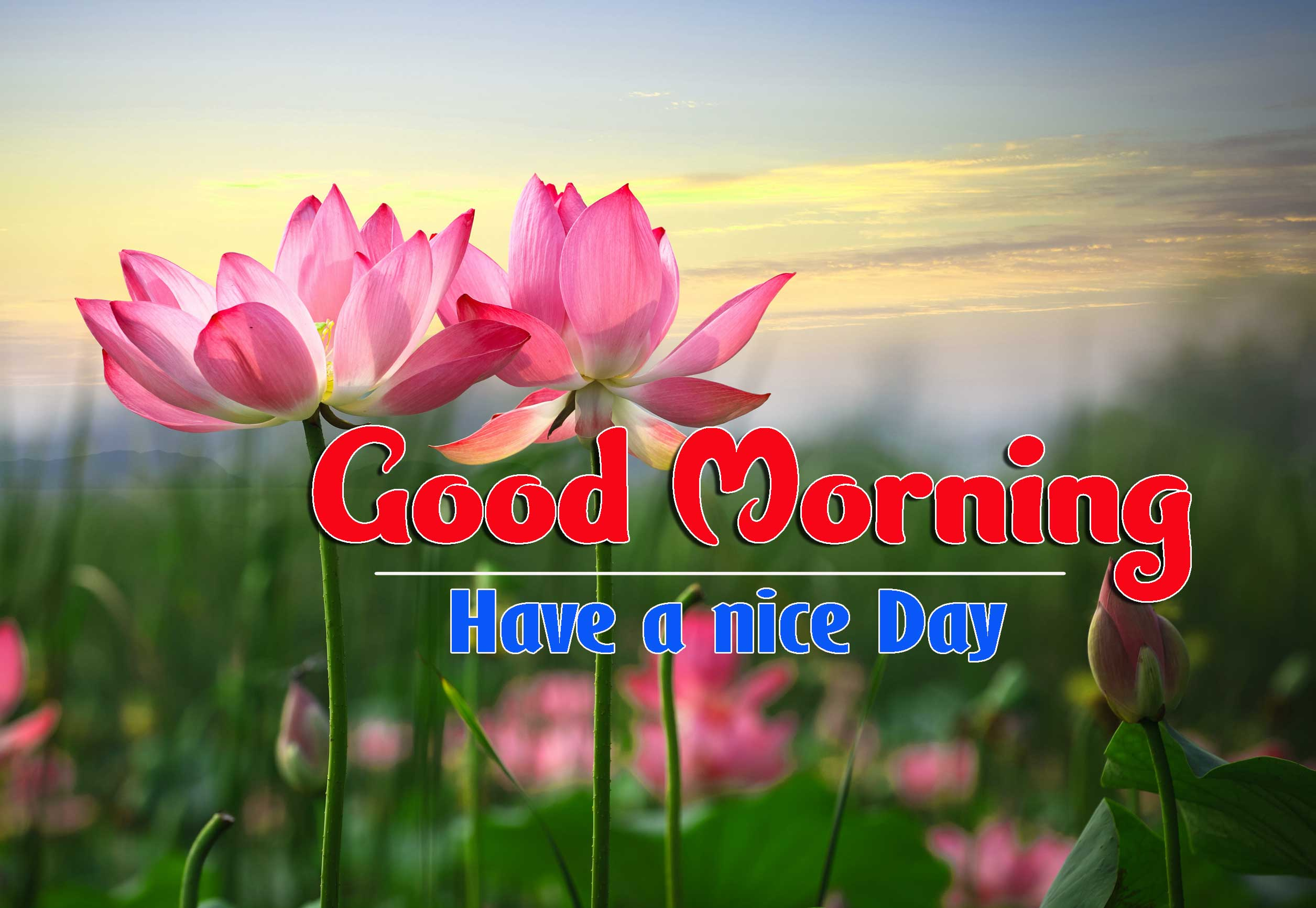 Good Morning Images HD 40