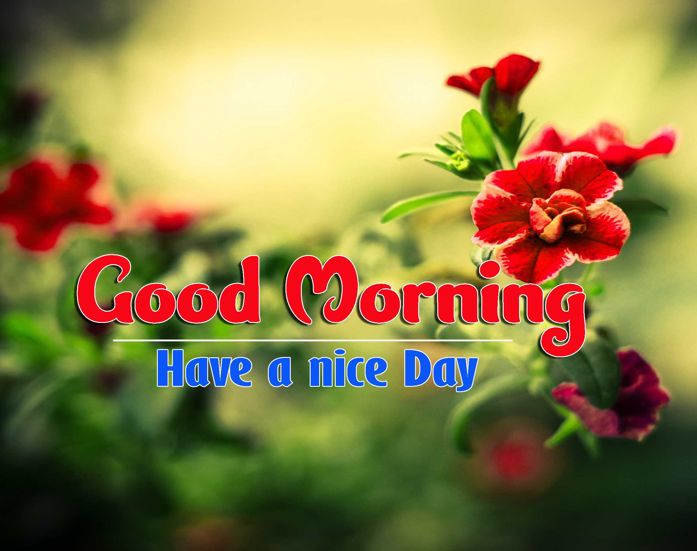 Good Morning Images HD 42