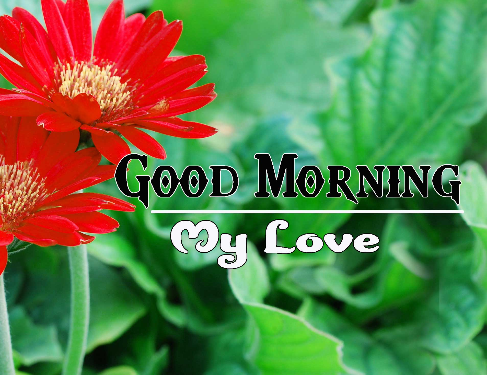 Good Morning Images HD 46