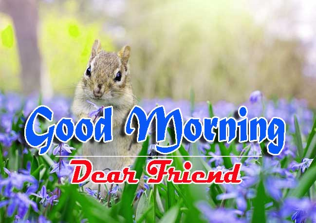 Good Morning Images HD 47
