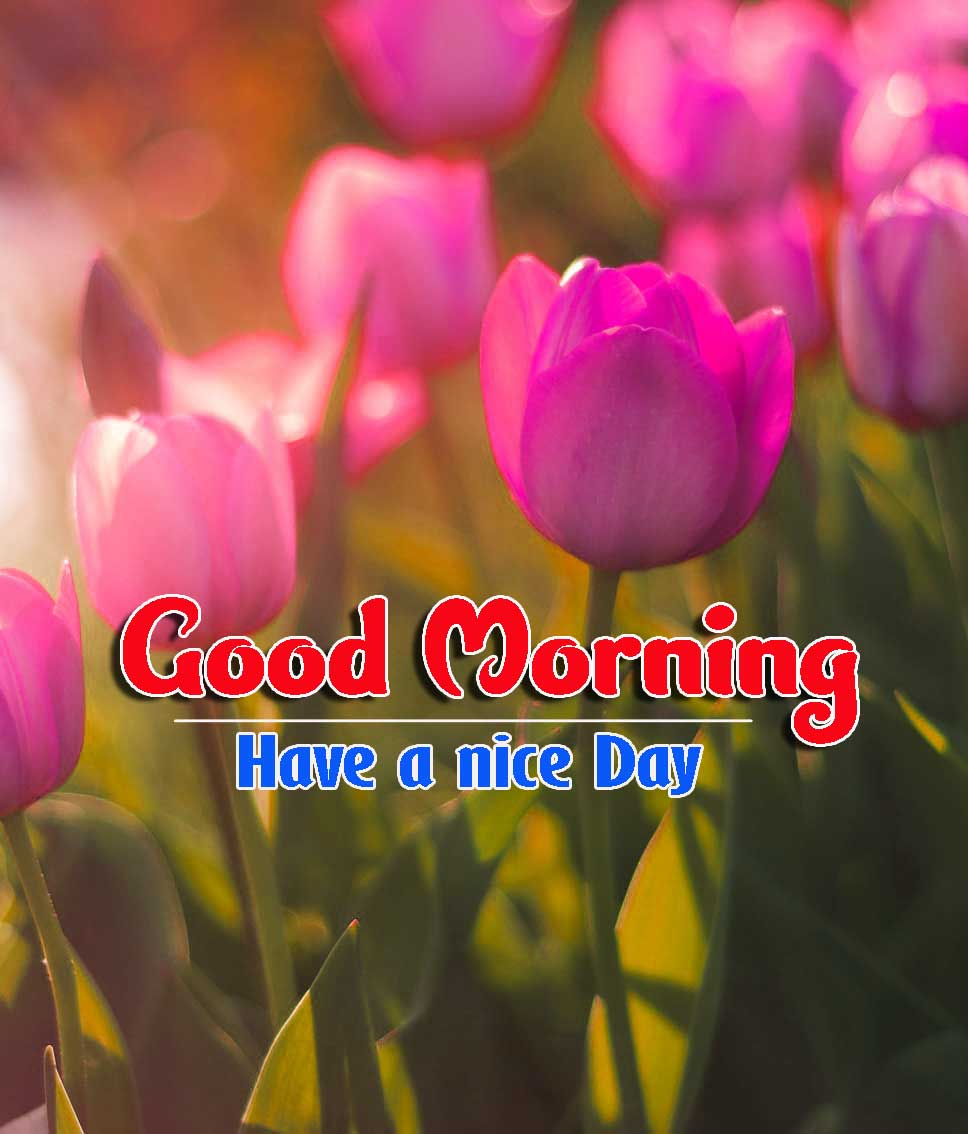 Good Morning Images HD 51