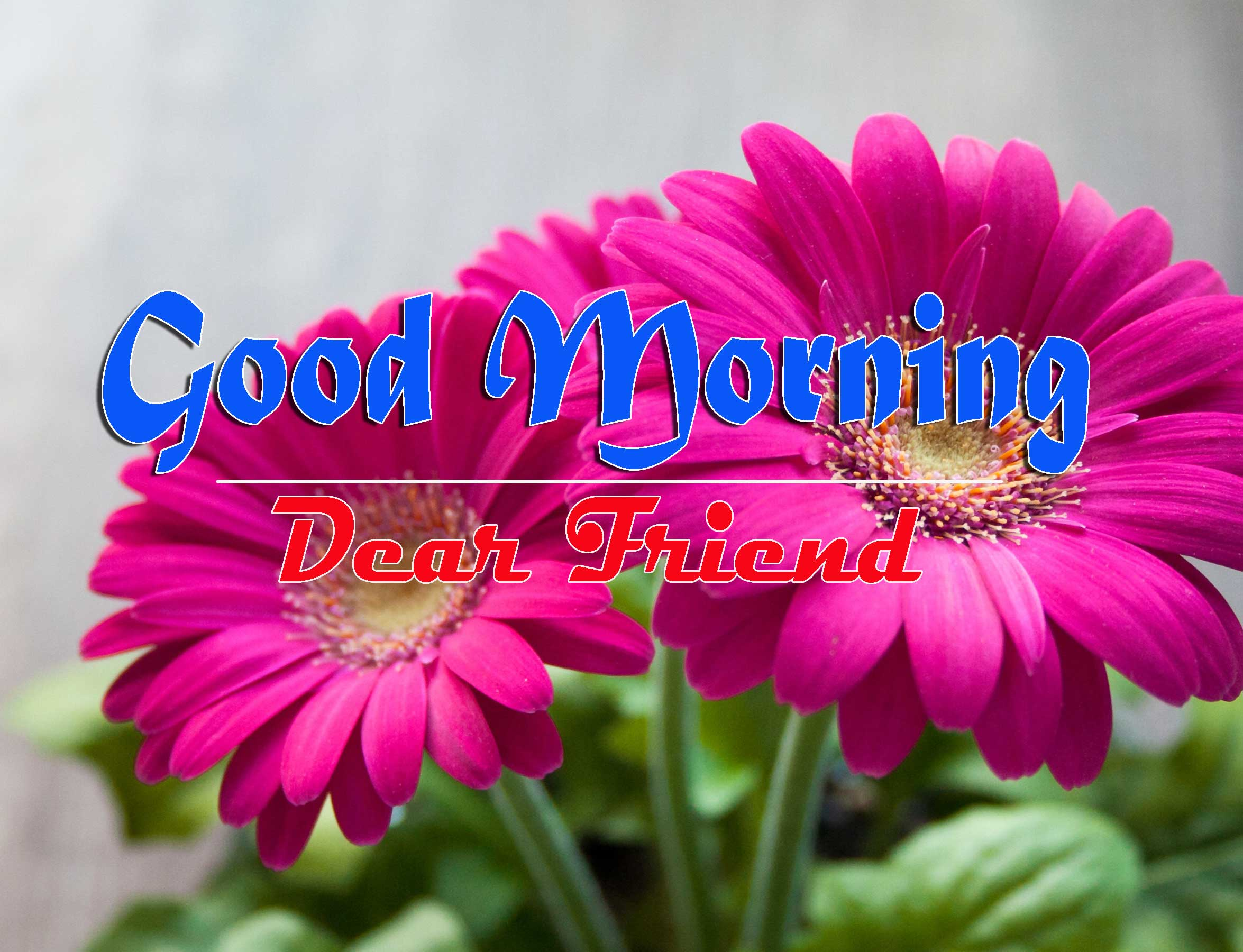 Good Morning Images HD 57
