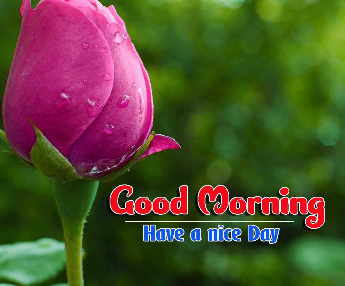 Good Morning Images HD 6