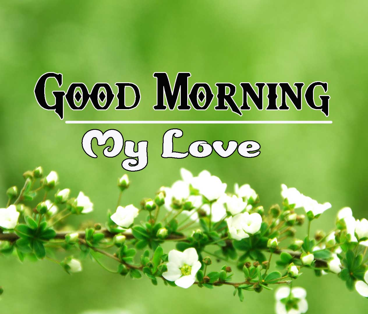 Good Morning Images HD 61