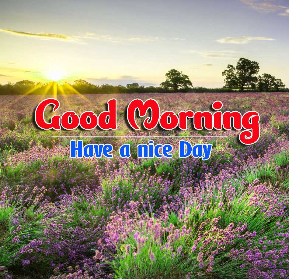 Good Morning Images HD 63