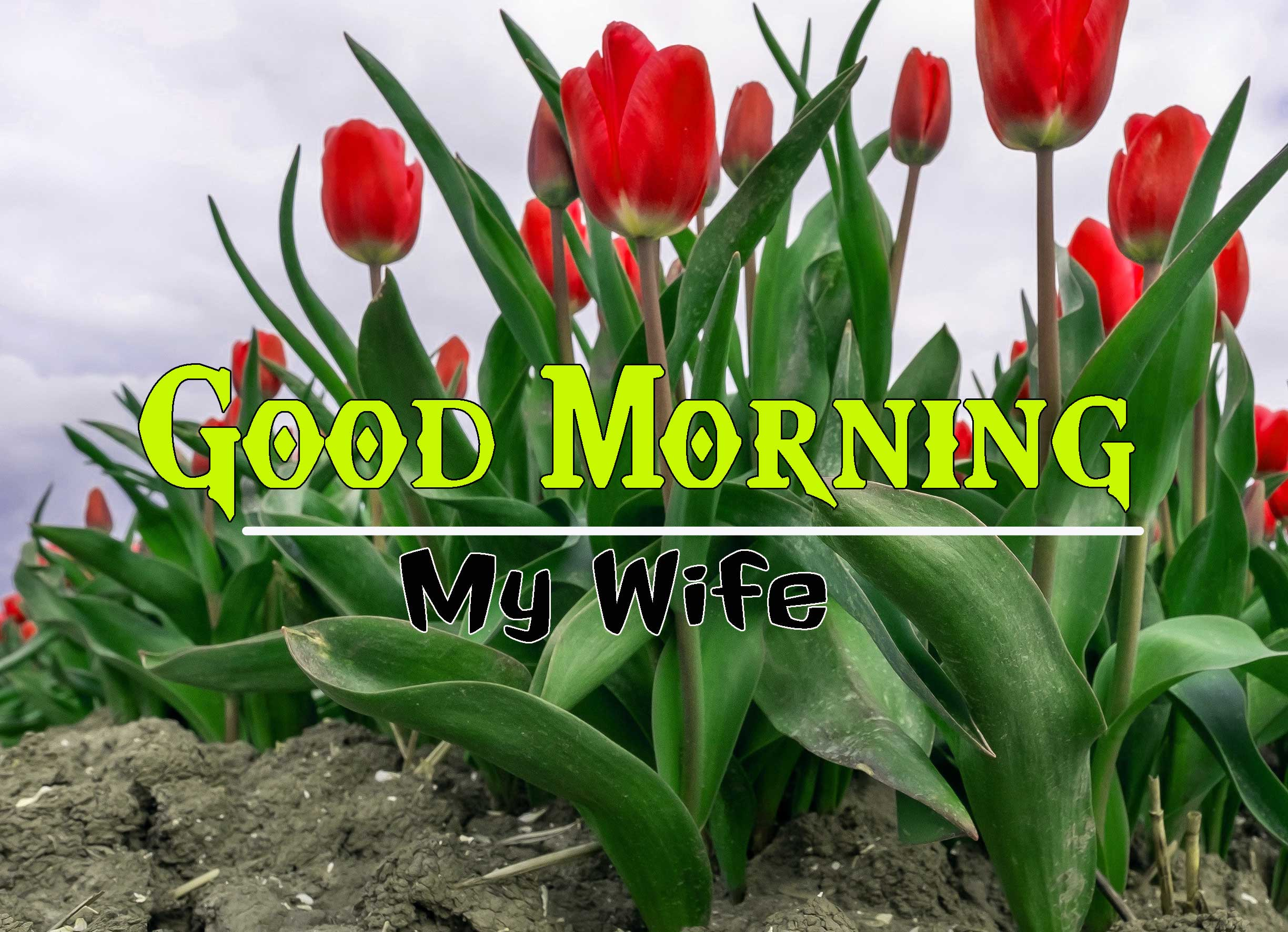 Good Morning Images HD 66