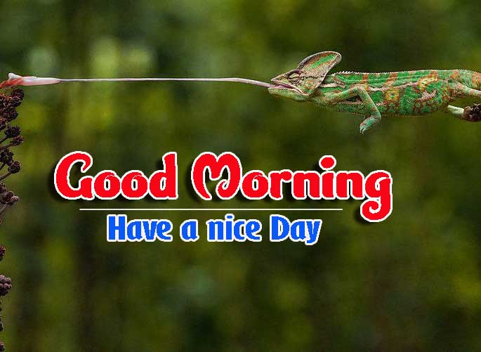 Good Morning Images HD 9
