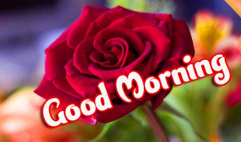Good Morning Photo Pics Download