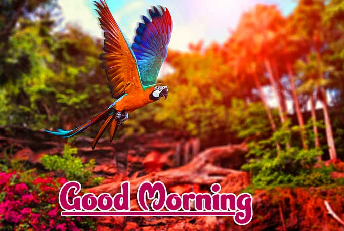 Good Morning Photo Pics Download Free