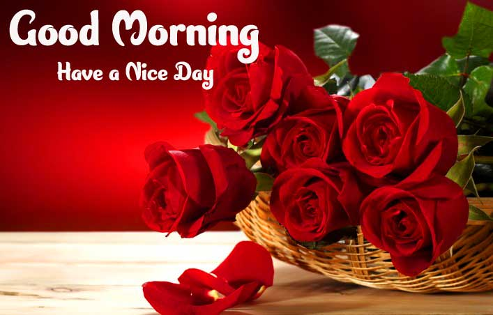 Good Morning Photo With Rose Download Free