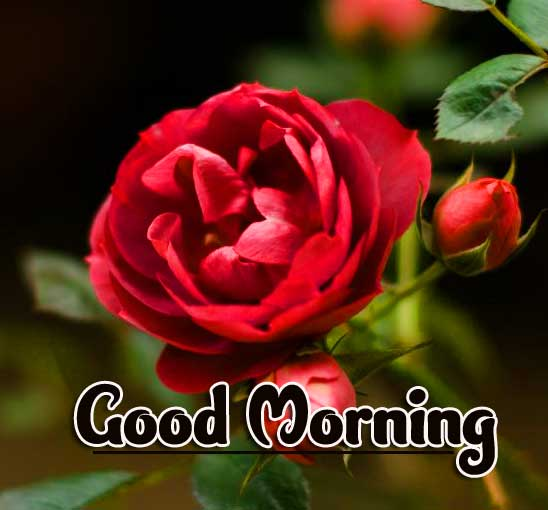 Flower Good Morning Photo Pics Wallpaper Dow load