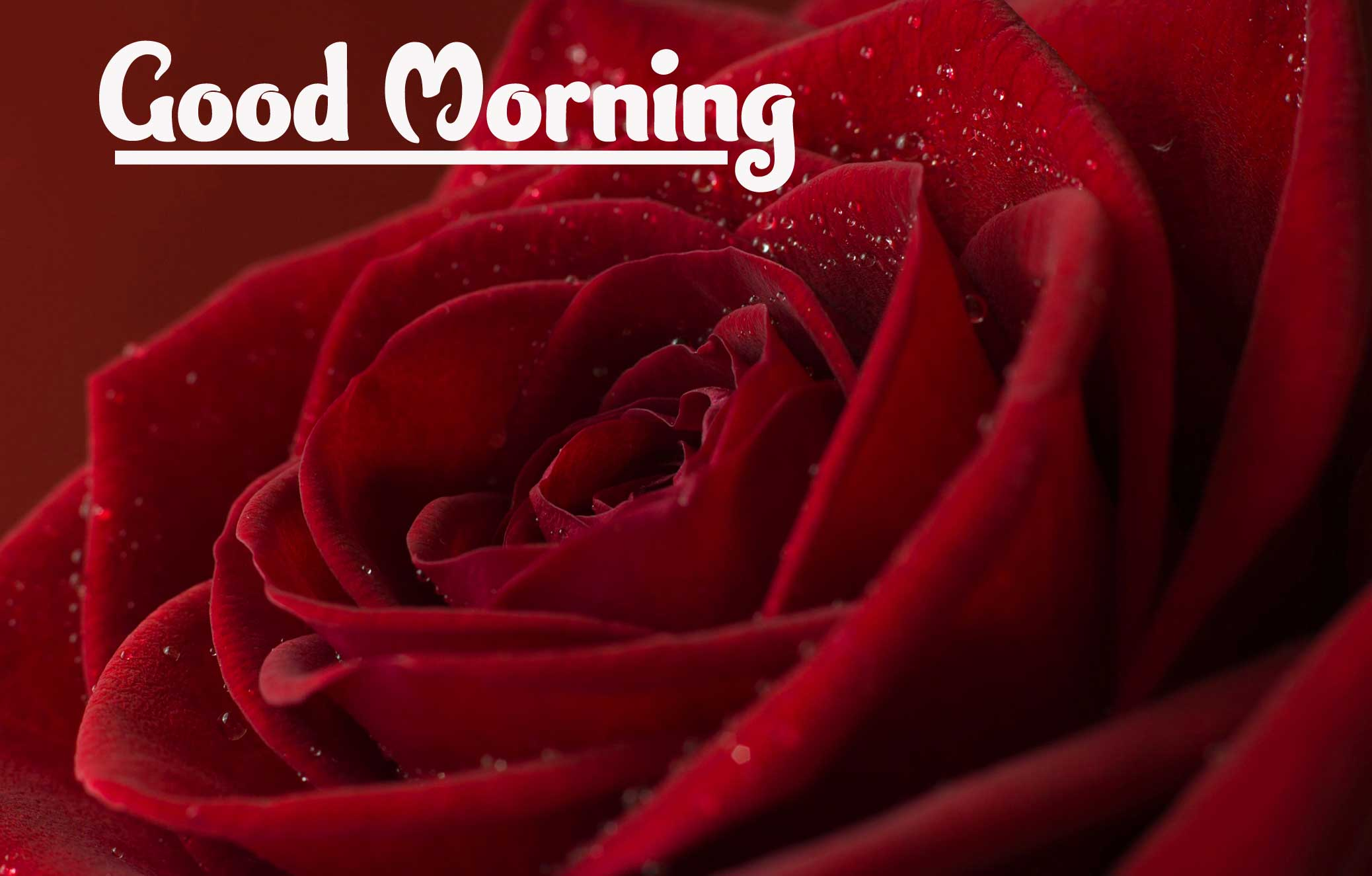 Good Morning Photo Pics Wallpaper Download