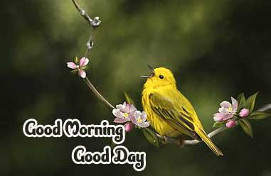Good Morning Photo Pics Download Latest HD Download