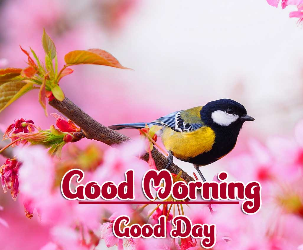 Latest Free Good Morning Photo Pics Images Download