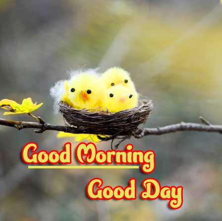 Good Morning Photo Pics HD Download Latest