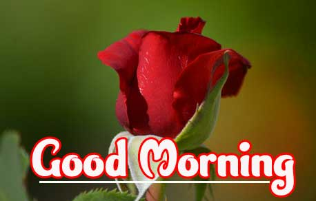 Good Morning Photo Images Pics With Rose