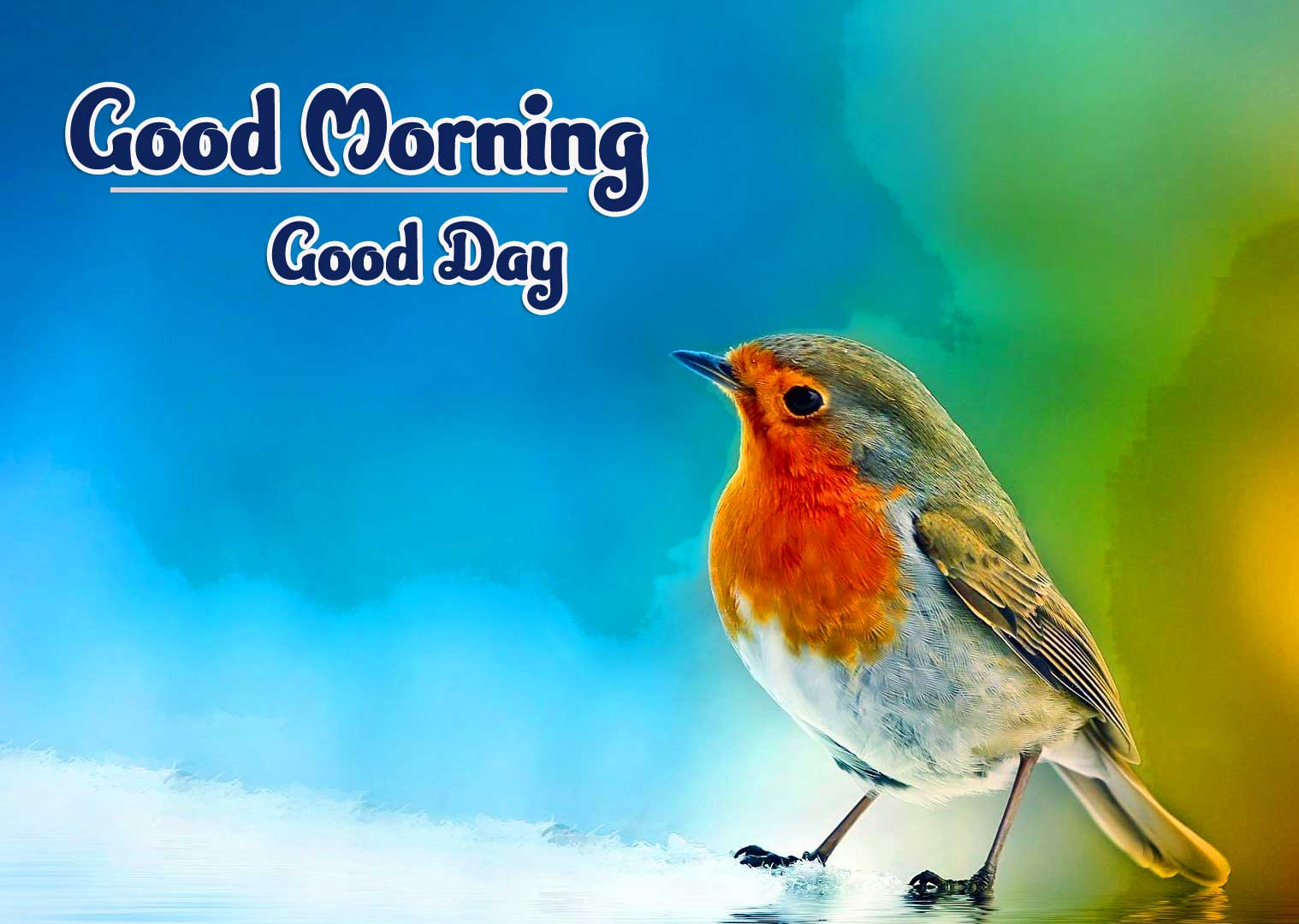 Good Morning Photo Pics Download Latest New