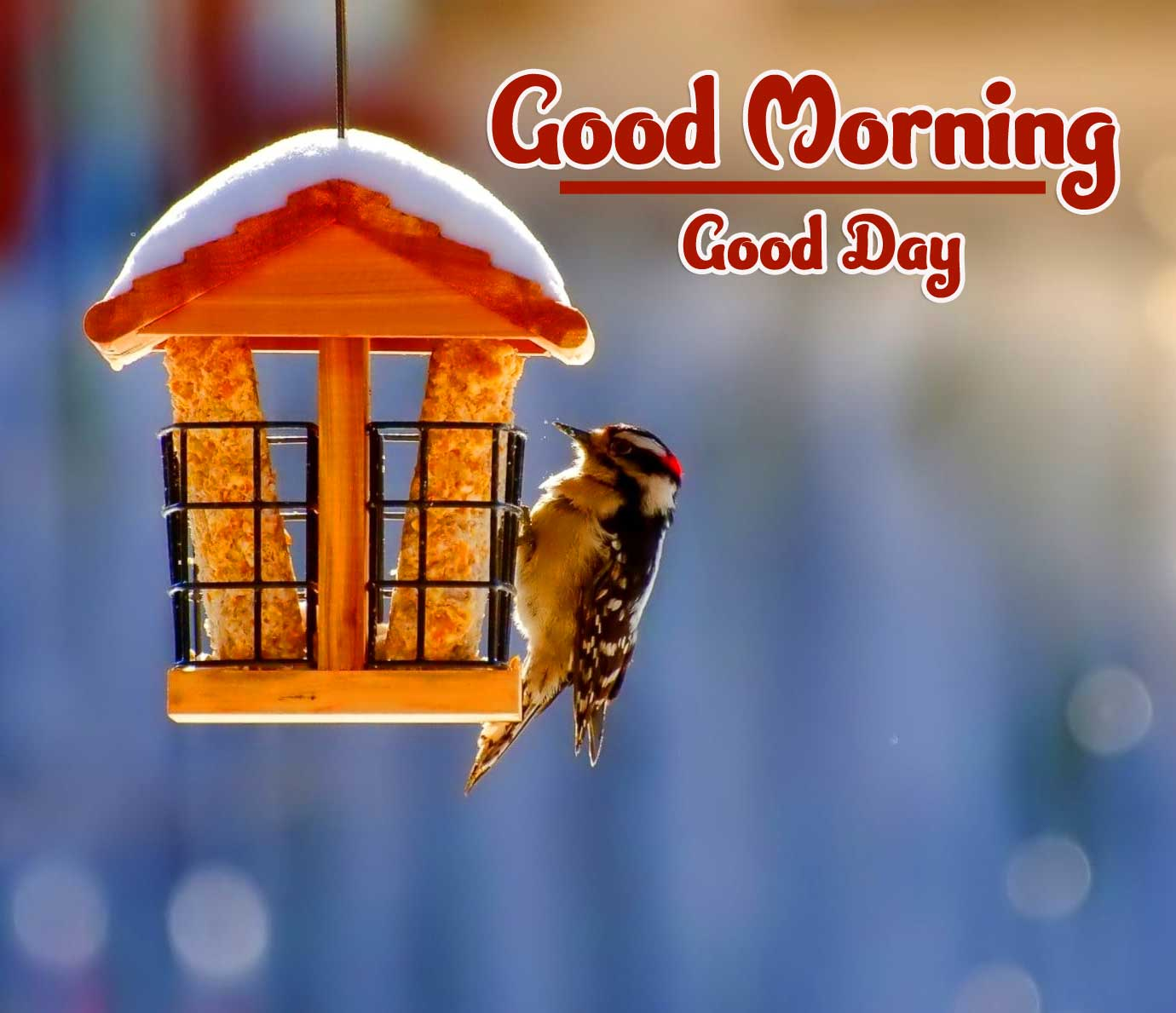 Good Morning Photo Wallpaper for Whatsapp