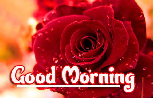 Flower Free Good Morning Photo Pics Download