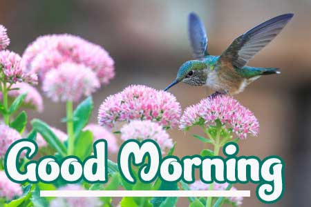 New Latest Free Good Morning Photo Pics Download
