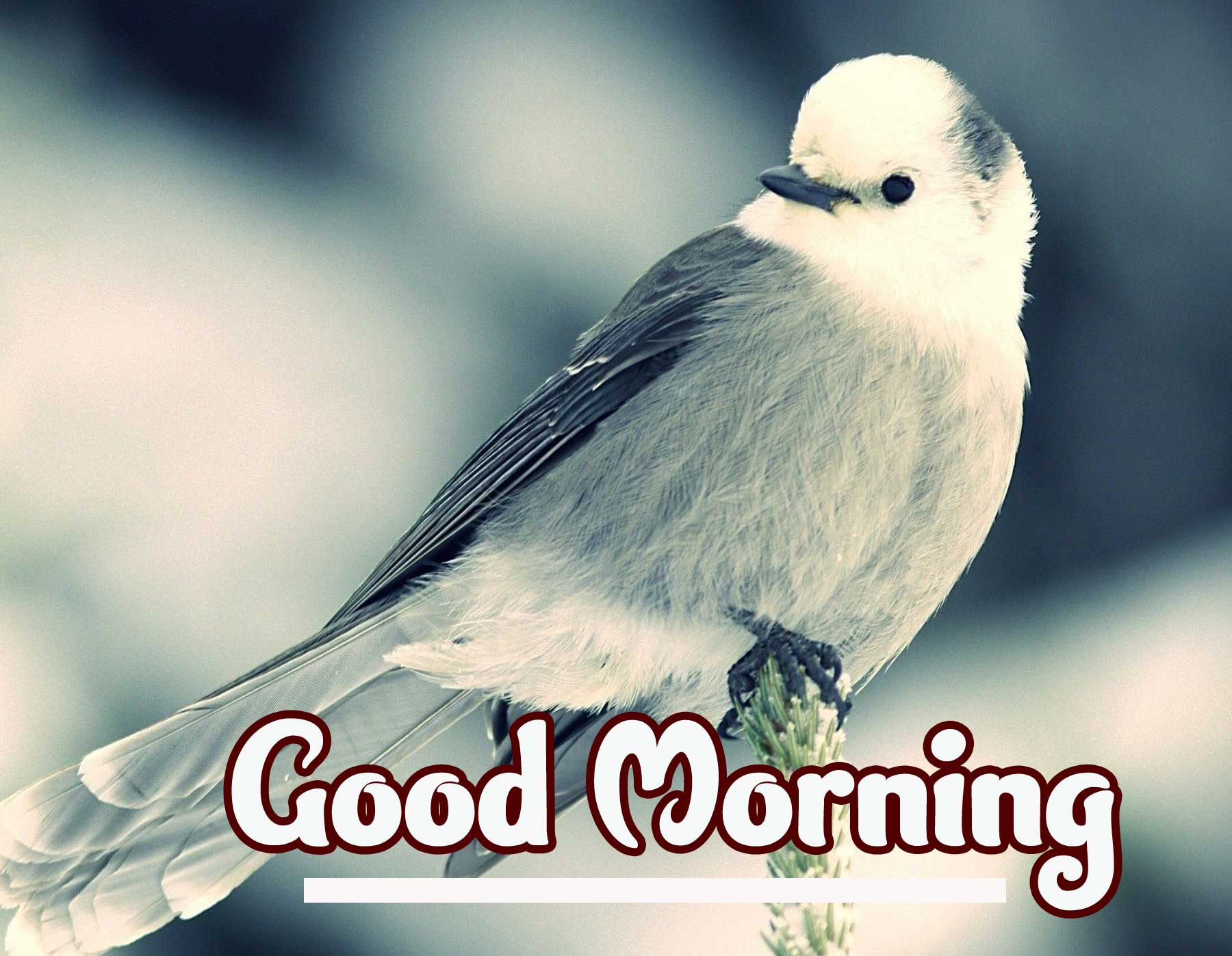 Good Morning Photo Pics Download & Share