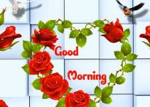 548+ Good Morning Photo Free Download