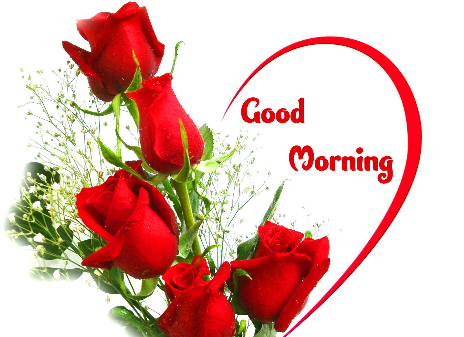 Red Rose Good Morning Images pic Download Free