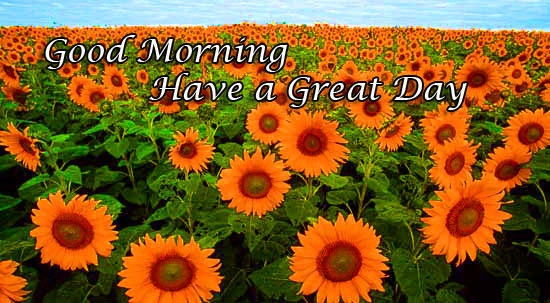 Good Morning Images Pictures Download Free