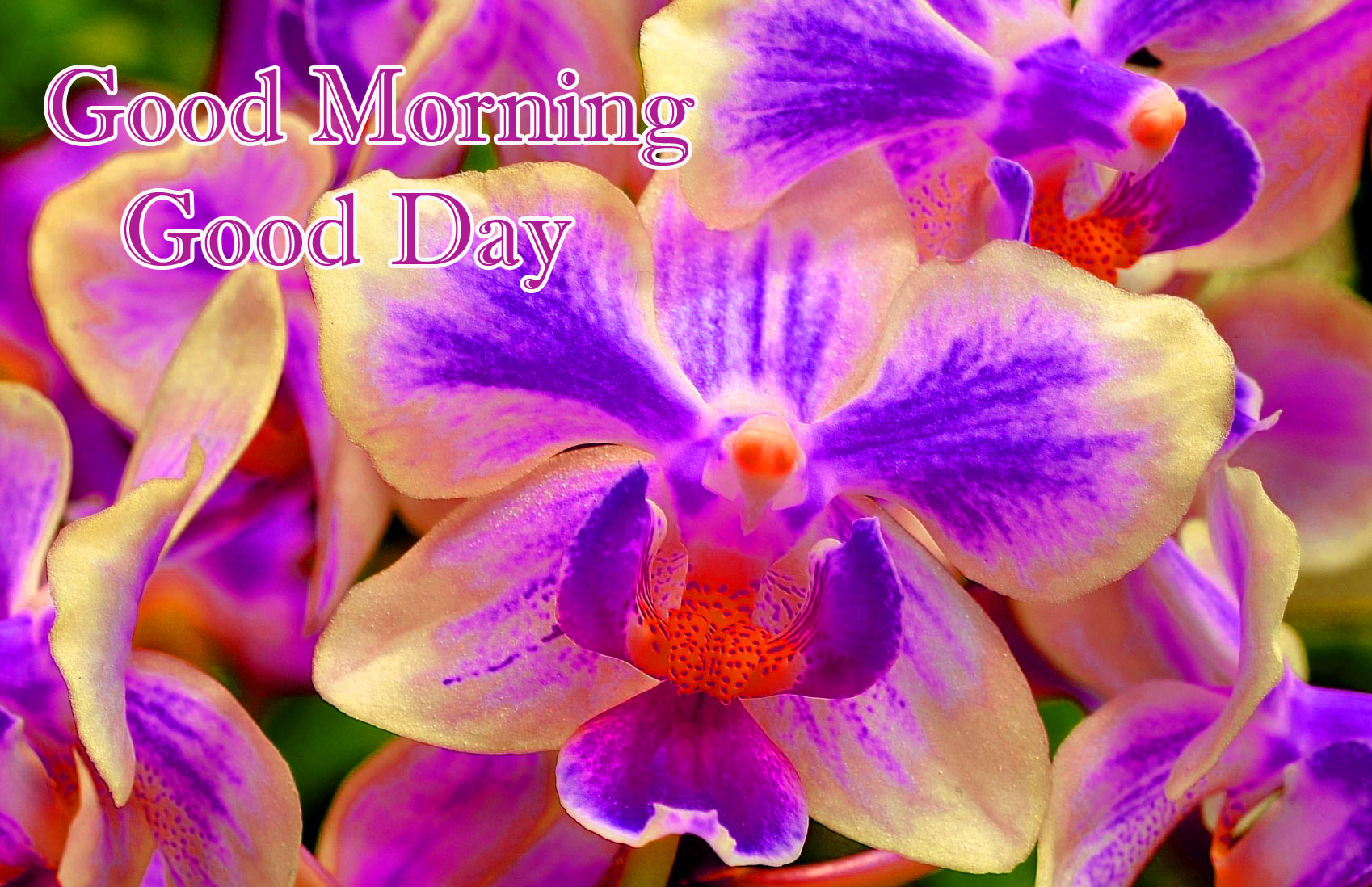 Good Morning Images Pics HD Download Free