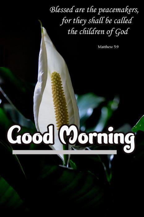 Good Morning Pics Download 96