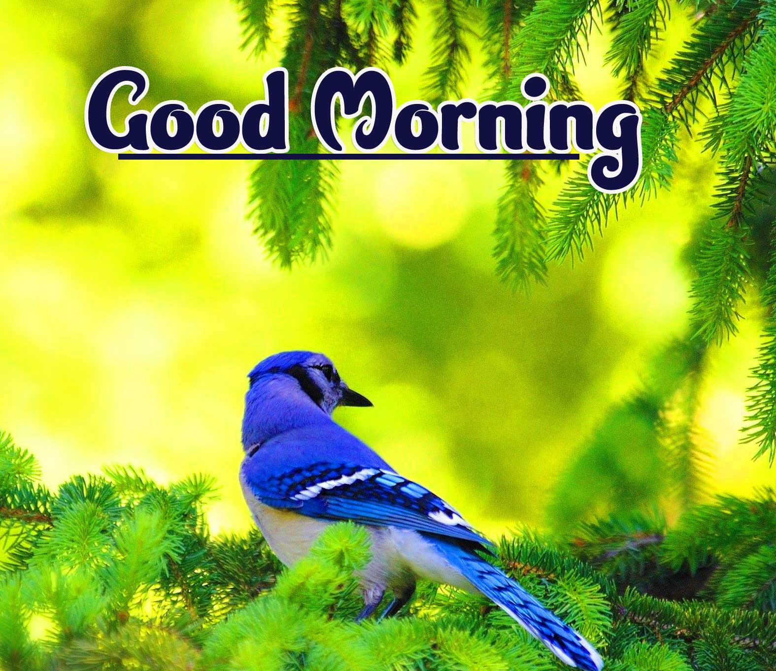 Good Morning Wallpaper Photo Pics Free Download