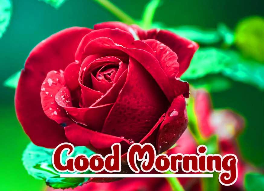 Beautiful Free Good Morning Wallpaper Pics DOWNLOAD