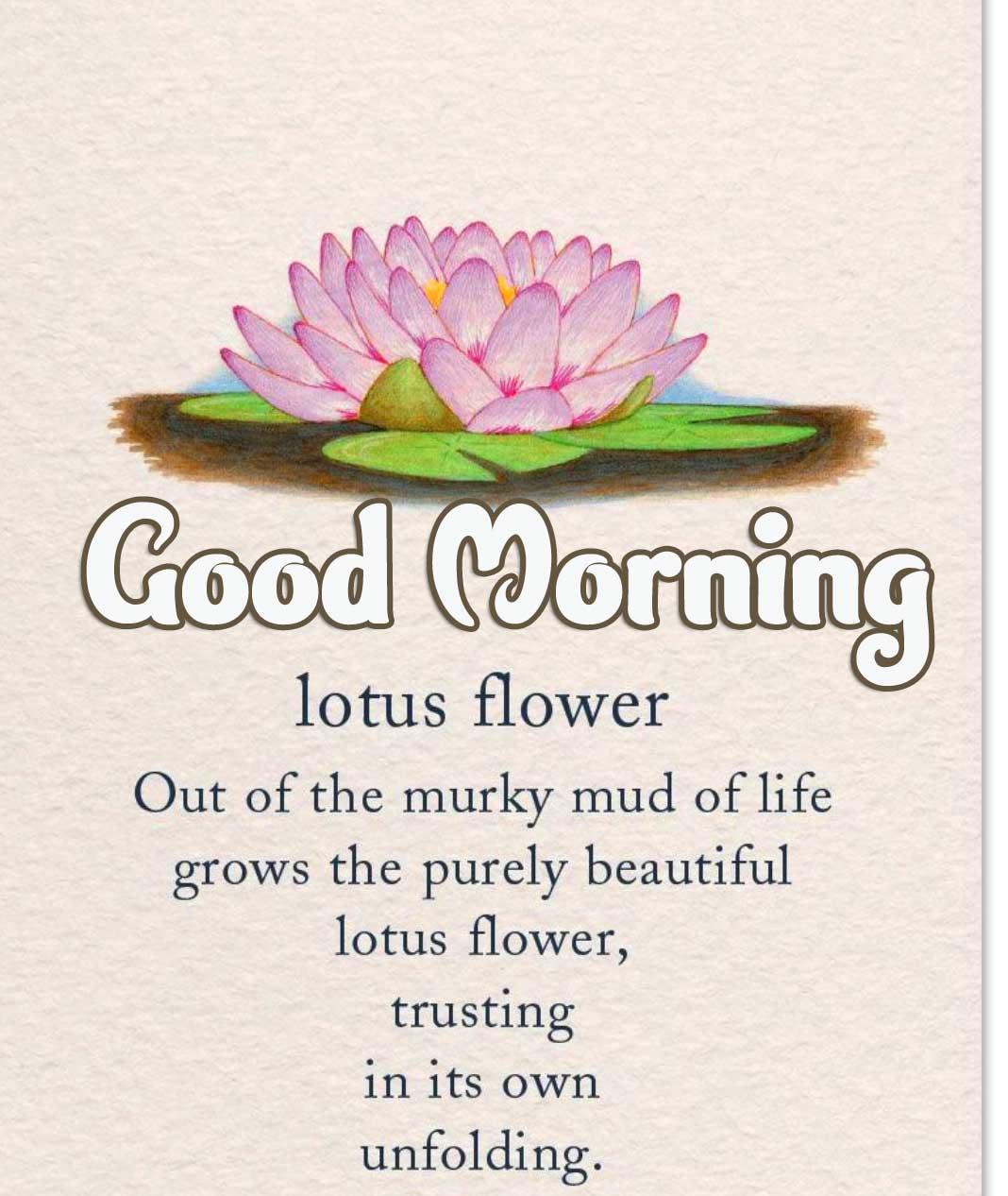 Good Morning Wallpaper photo Free Download
