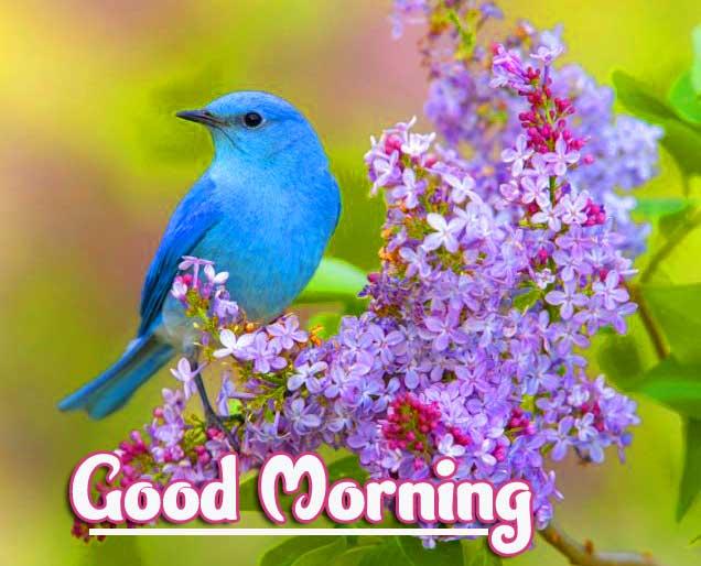 Good Morning Wallpaper Pics photo free Download