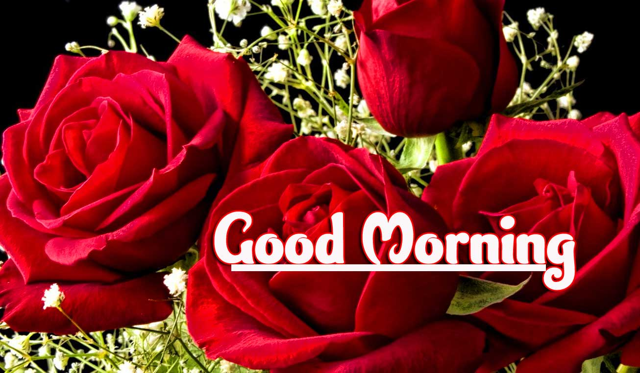 Rose Free Good Morning Wallpaper Pics DOWNLOAD